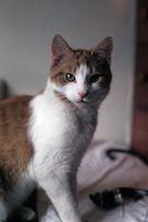 CatDidIt
